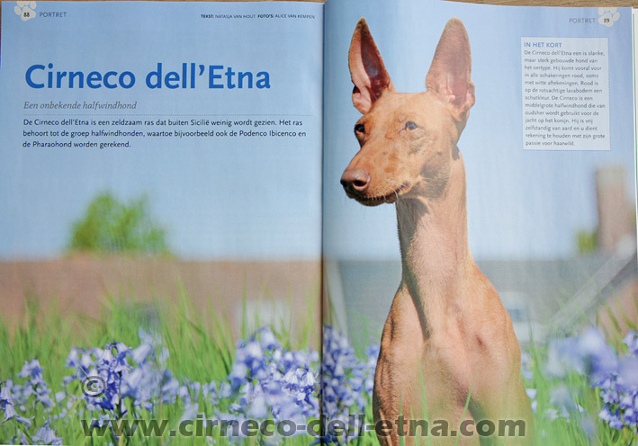 our dogs in the magazine